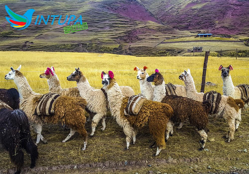 Descubriendo Perú 7 Días