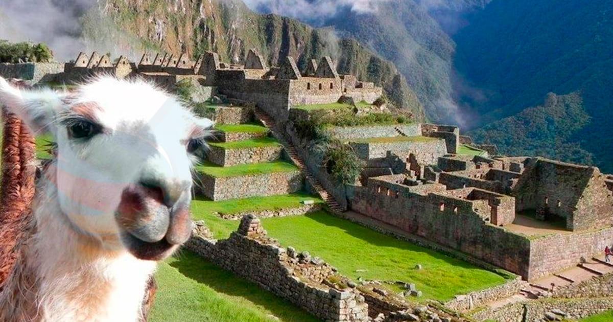 Sexi-Lama-Machu-Picchu