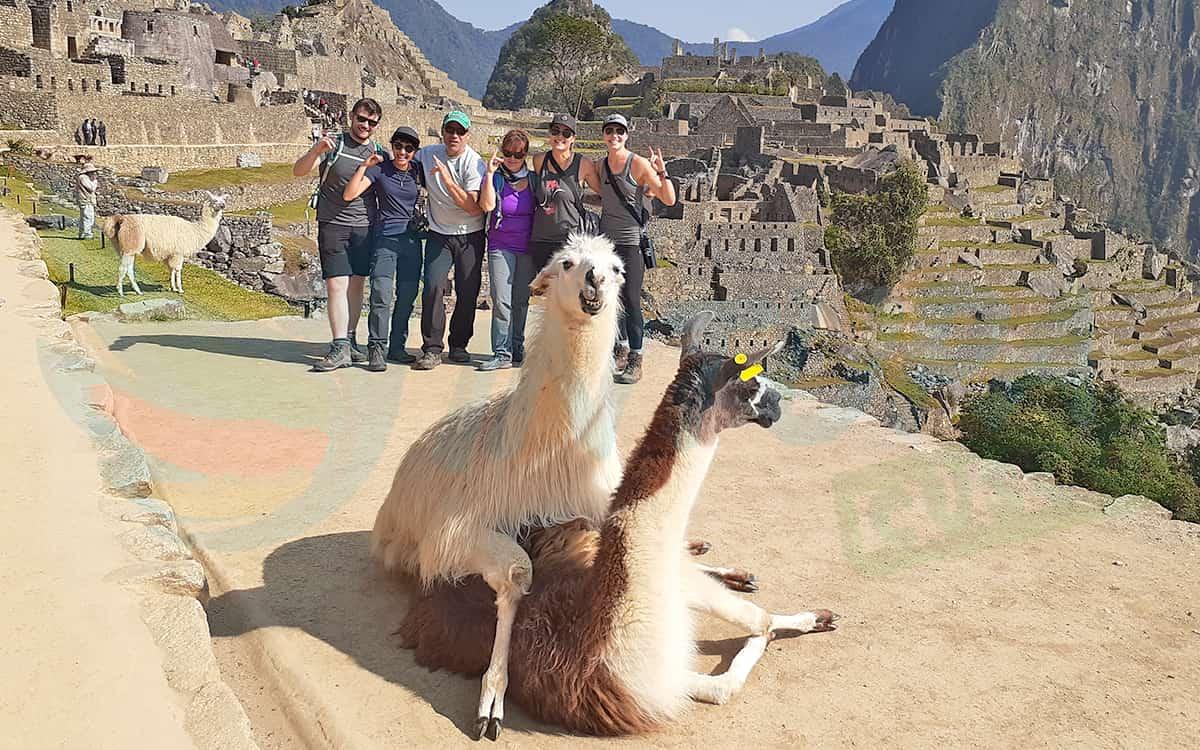 Machu-Picchu-Llamas