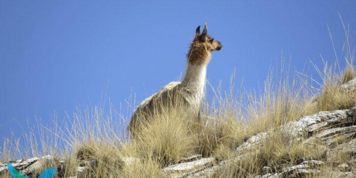 Cuatro Lagunas Cusco